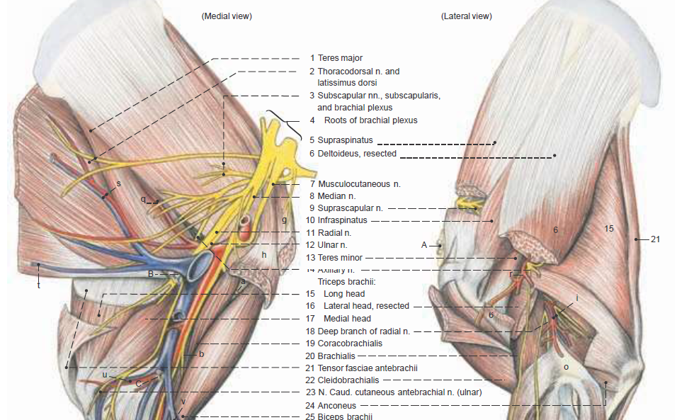 Anatomy of the Horse | Veterinary Hub