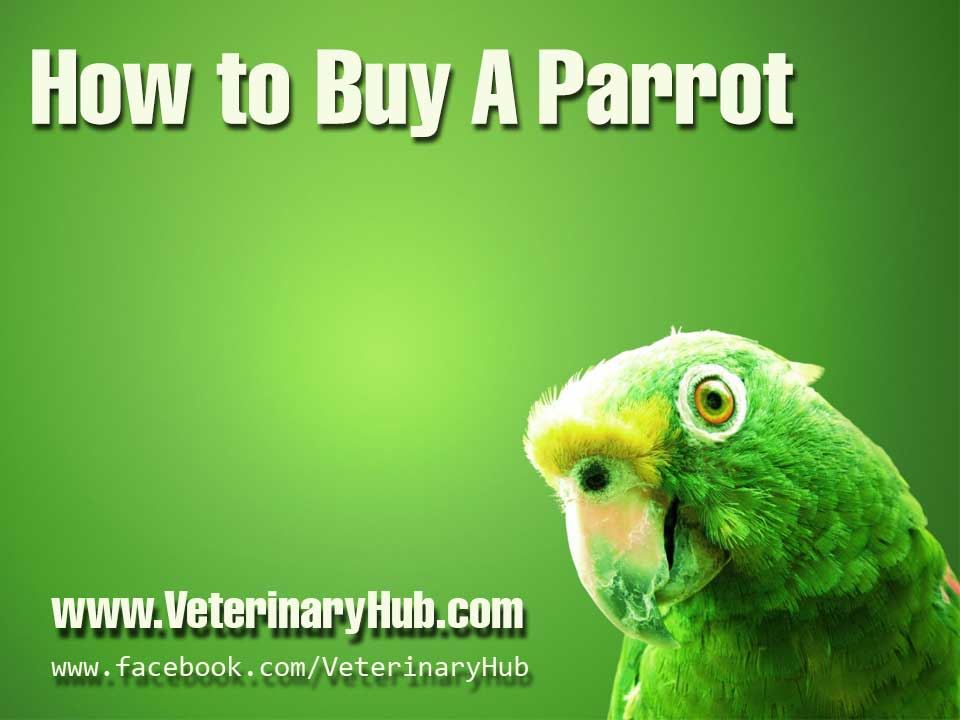 How-to-buy-a-parrot