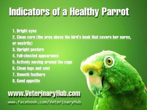 Parrot-Health-Indicators