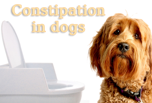 how to fix dog constipation