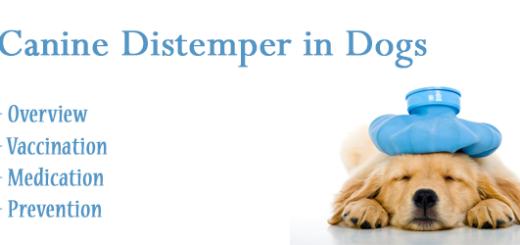 Canine Distemper in Dogs