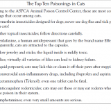 Poisons in Cats