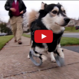 The Dog with 3D Printed Legs